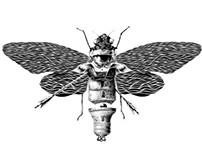 Moth attack