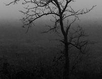 In mist shrouded