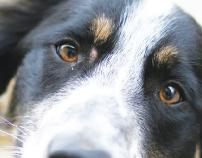 Dogs Rule Flyer