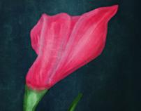 The Tulip of Syria