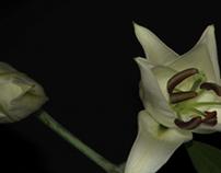 flower time-lapse full