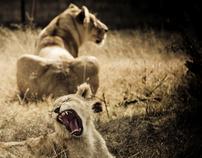 ANIMALS [Photofolio]