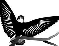 Bird - Fly high fly free