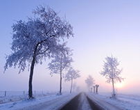 Road in the winter