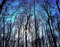 Beauty in the Tree