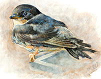 Rootzie the little swallow