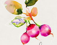 Watercolor Food Veggie Illustration