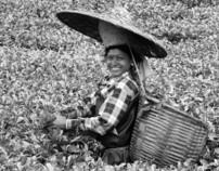 UNSUNG TEA COMMUNITY ASSAM INDIA