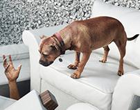 Monika's Doggie Rescue // Rescue A Dog