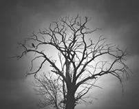 trees in myst