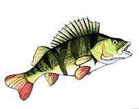 Fish Paintings