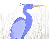 Heron illustration