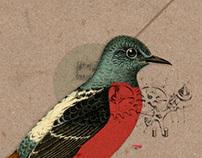 Birds | Collage Maker
