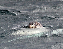 Iceland 2013 : Animals