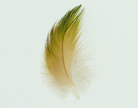 Studies of Australian feathers