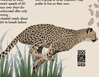 Houston Zoo Poster
