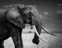 Burn the ivory