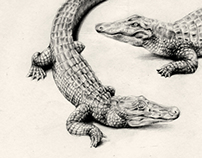 Jewerly pencil drawings