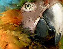 Parrot in colors