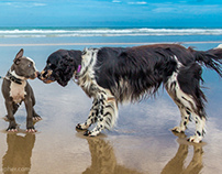 Dogs on Beaches and in Cafes