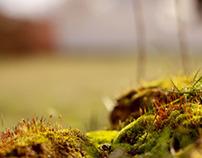 Mossy World