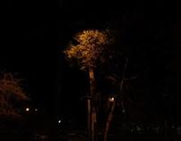 Dark Light Symbiosis