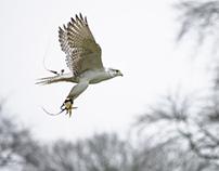 Captured in Flight
