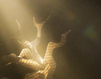Light | Bienal do Livro