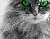 Mr Goodcat