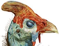 Naturalist print for Ilustraciencia competition