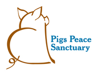 Pigs Peace Sanctuary