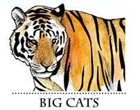 BIG CATS - scientific illustration