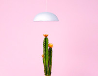 1F — Plants