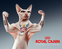 Royal Canin : semper fi Behance collaboration n° 6