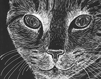 Cat drawn on scratchboard