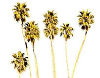Beverly Hills Party - Artigli Girl SS14