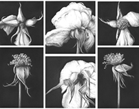 Roses - a collection