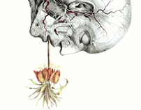 Anatomy & Flora