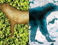 WWF - Market Segmentation