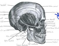 Anatomy Lessons