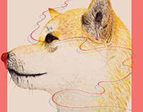 animal postcard