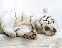 Wild sleep