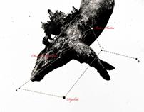 ... constellation / the cetus