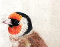 The Golden Finch
