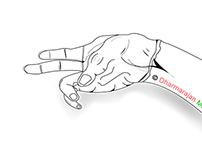 Vector Drawing - Hand