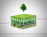 Explore Asheville Leaf Animation