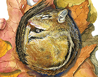 Hibernation : Chipmunk