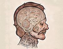ANATOMY - Illustrations