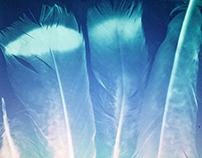 Naturalia Cyanotypes