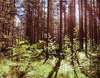 Tallinn, @Pirita forest
